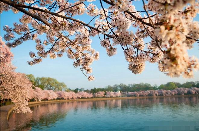 Vẻ đẹp nước Mỹ vào mùa xuân