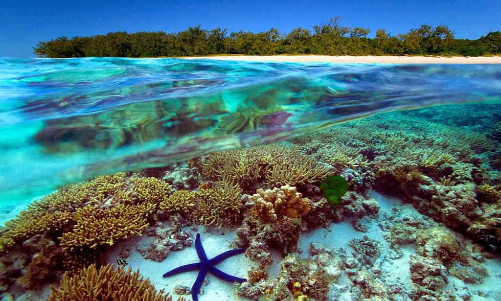 BCBB45 Underwater view of Great Barrier Reef Australia